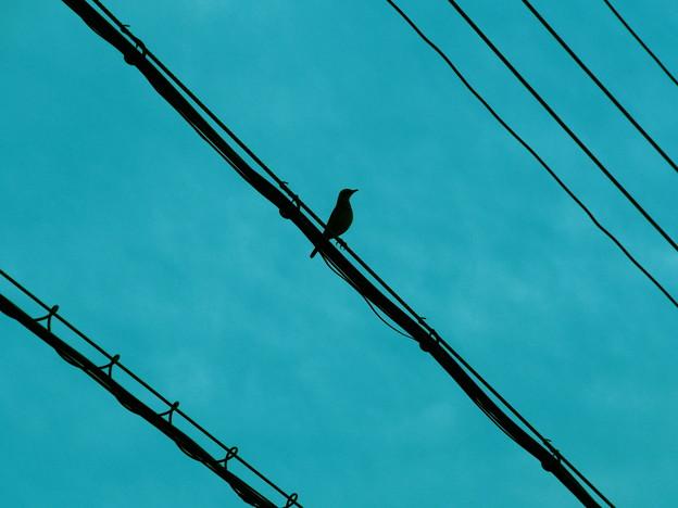 鳥と線と空と