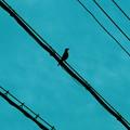Photos: 鳥と線と空と