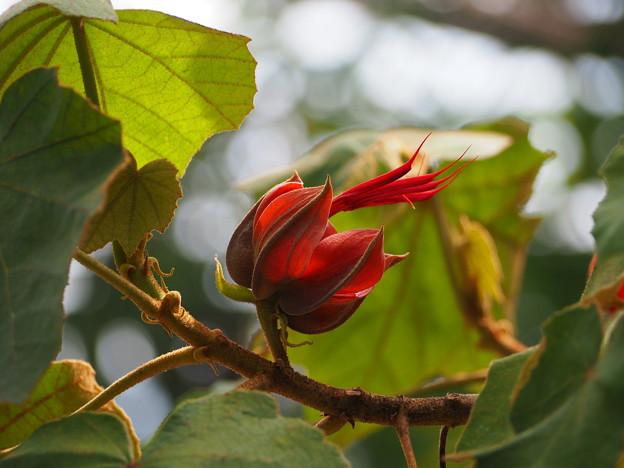 Photos: 悪魔の手の木