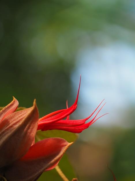 デビルズハンドツリー、の花