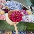 写真: 花浮かぶ手水舎