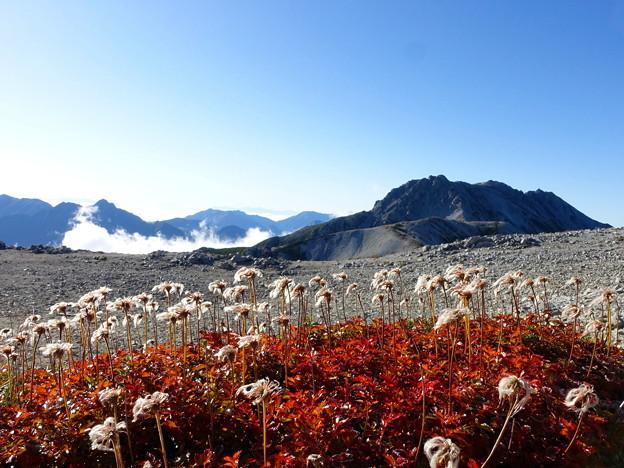 綿毛越しの立山連峰