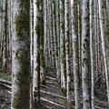 Photos: 神秘の森
