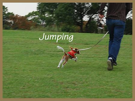 タルトのジャンプ