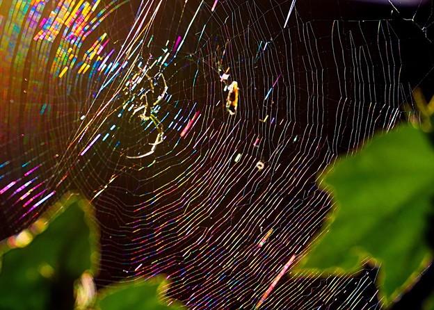 朝日で輝く蜘蛛の糸