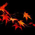 鍬山神社の紅葉1