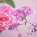 薔薇とムシトリナデシコと姫ライラック