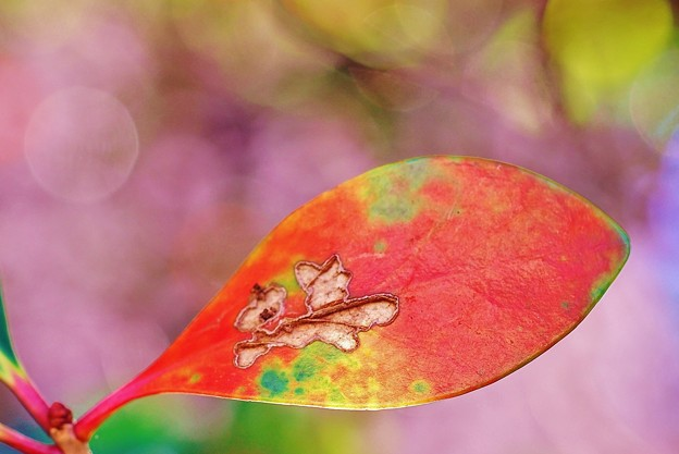 木の葉のお絵かき