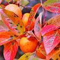 柿の実と紅葉