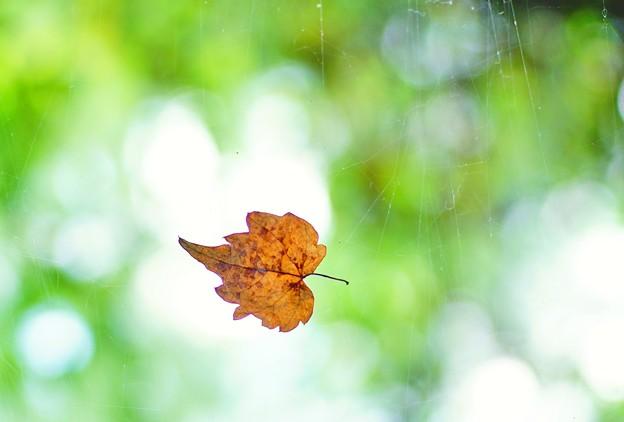 木の葉のゆくえ