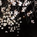 Photos: さくら201804280001