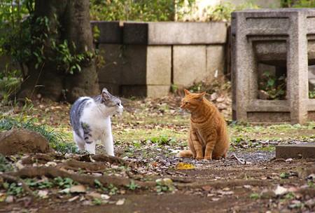 谷中の猫さん・・