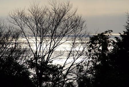 冬木立と・・海・・