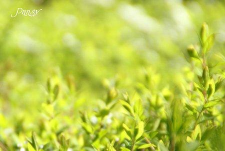 春のgreen・・