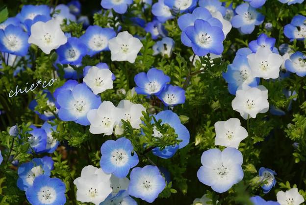 くりはま花の国-136