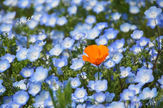くりはま花の国-134