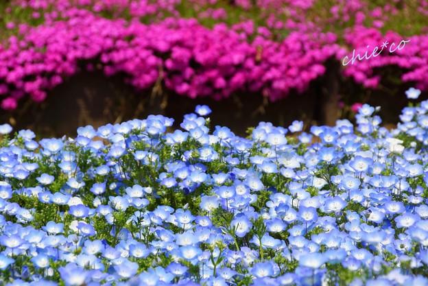 くりはま花の国-119