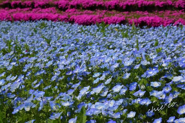 くりはま花の国-089