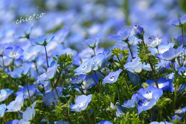 くりはま花の国-092