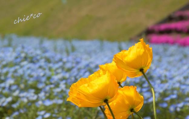 くりはま花の国-099
