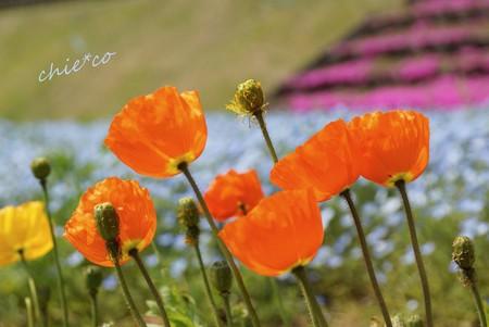 くりはま花の国-102