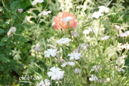 横浜 English Garden-311