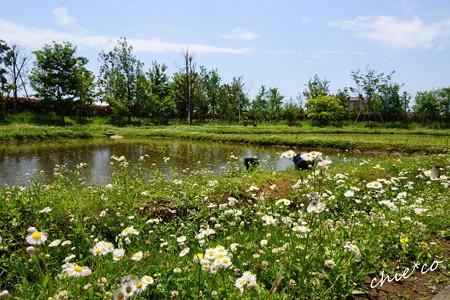 花菜ガーデン-100