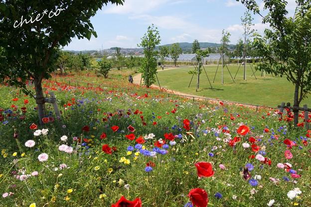 花菜ガーデン-020
