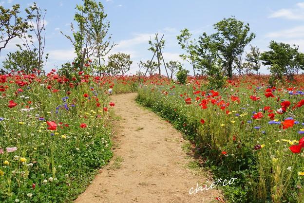 花菜ガーデン-012