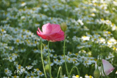 花菜ガーデン-167