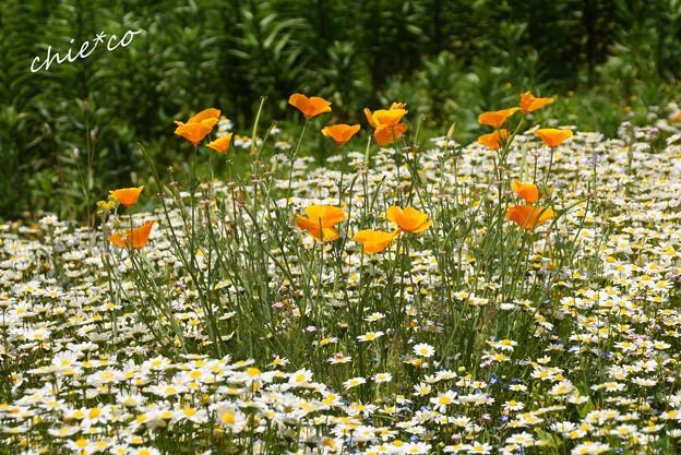 花菜ガーデン-177