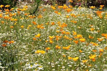 花菜ガーデン-178