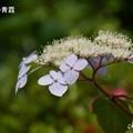 写真: 鎌倉長谷-117