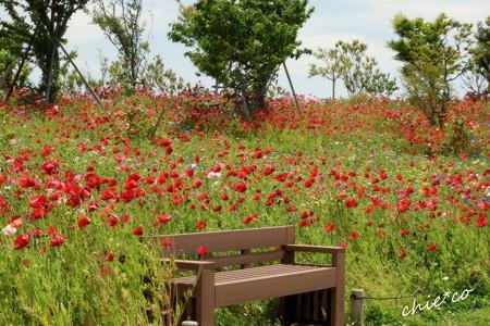 花菜ガーデン-014