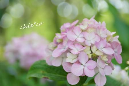 八景島-057