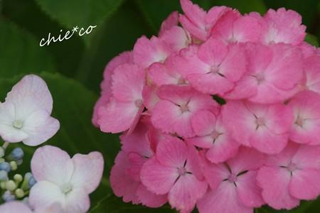 八景島-062