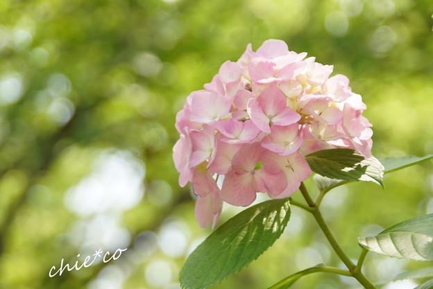 八景島-079