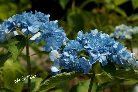 八景ブルー・・