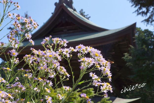 北鎌倉-283