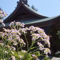 Photos: 北鎌倉-283