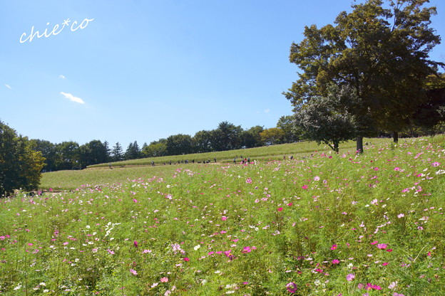 昭和記念公園-361