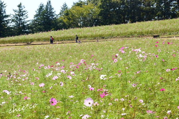 昭和記念公園-365