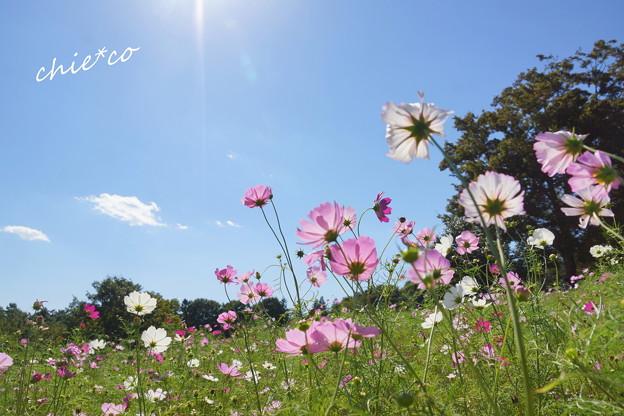 昭和記念公園-375