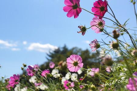 昭和記念公園-398