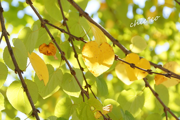 昭和記念公園-412