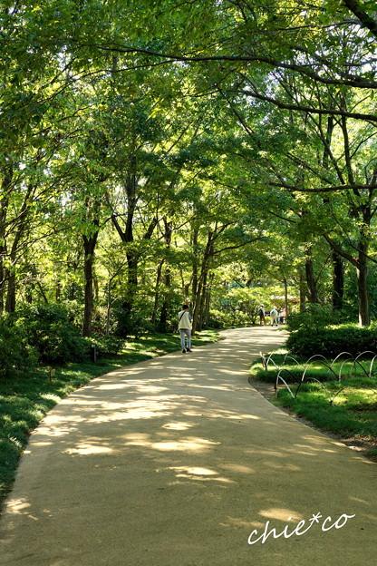 昭和記念公園-432