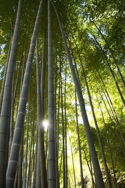 竹林の初日。。