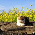 写真: 吾妻山公園-146