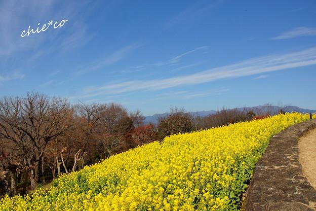 吾妻山公園-160