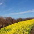 写真: 吾妻山公園-160